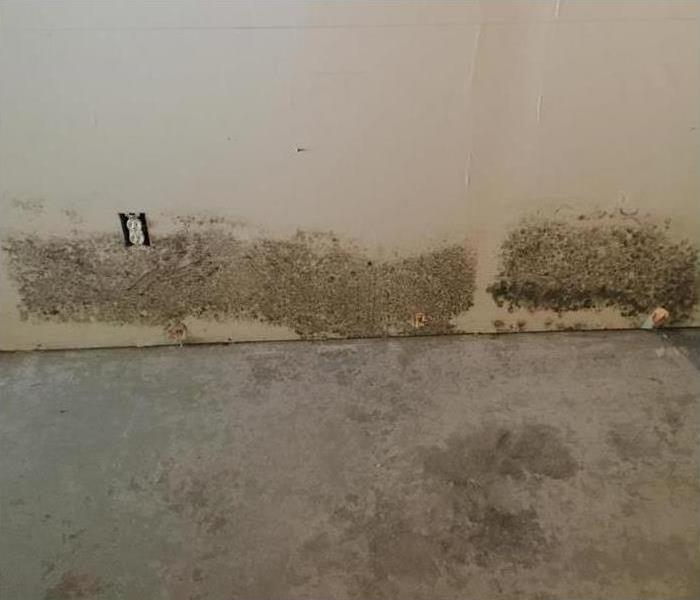Mold Remediation Controlling Mold Growth in your Home or Business